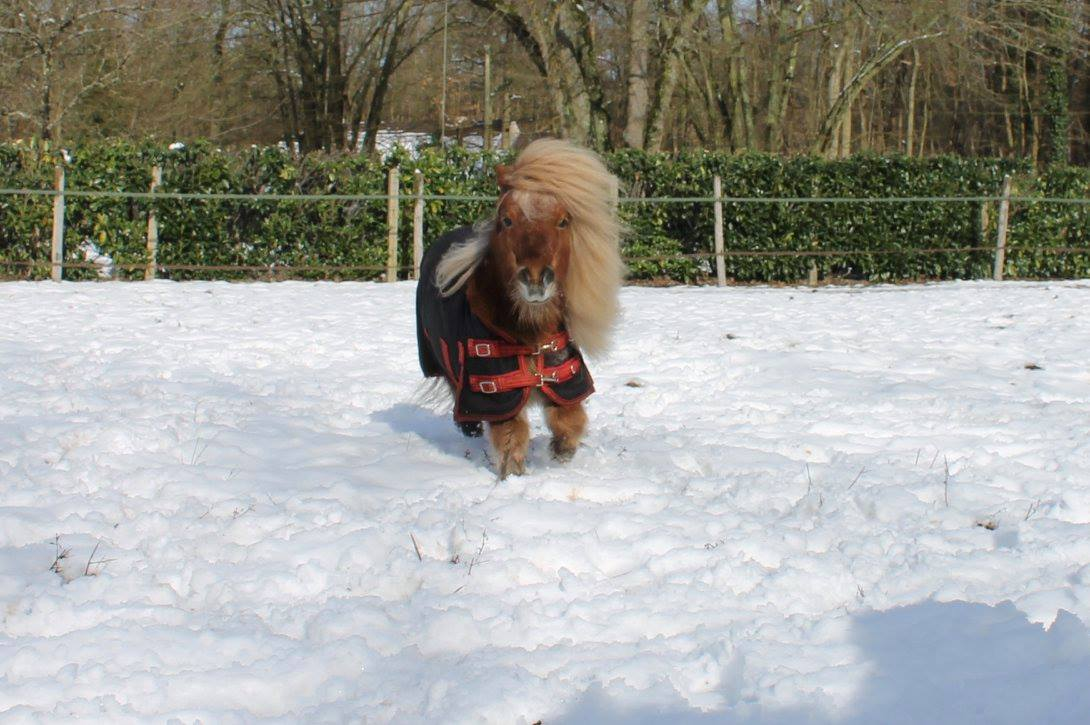 poney neige froid