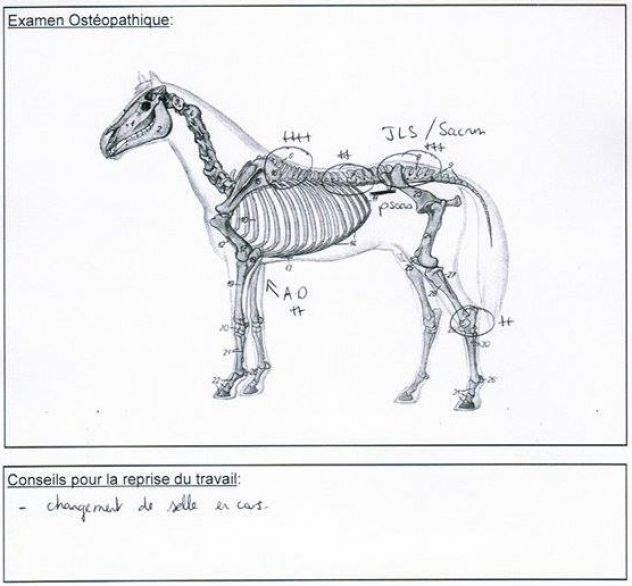 saddle-fitting-troubles-musculaires-et-osteo