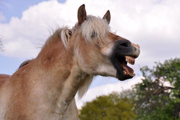 les-dents-de-loup
