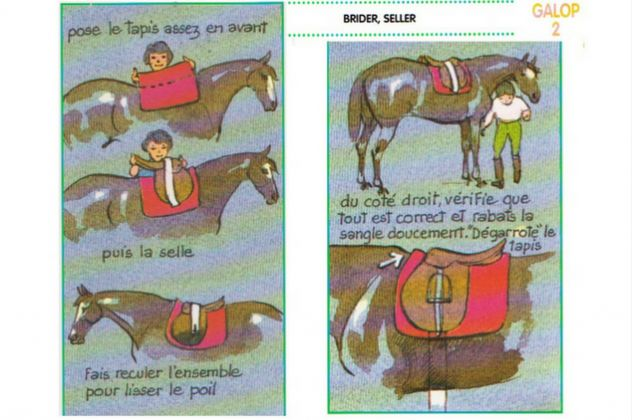 saddle-fitting-bien-seller