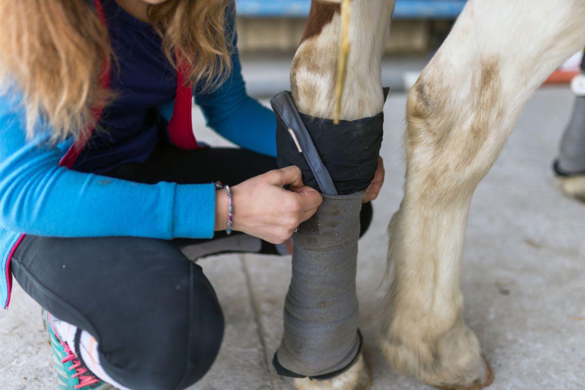 proteger-un-cheval-au-repos