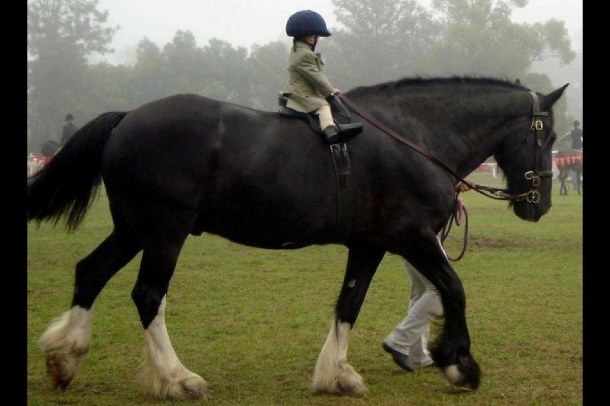 saddle-fitting-la-necessaire-adaptation