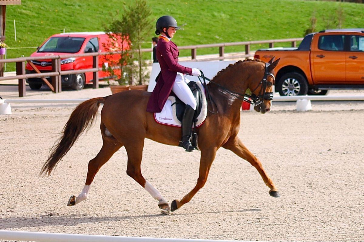l-assurance-du-cheval-de-sport