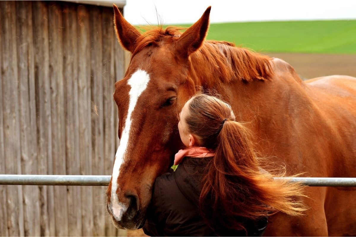 l-assurance-du-cheval-retraite